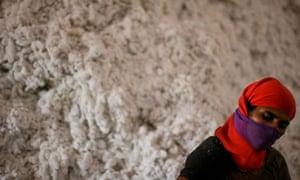 An Indian cotton worker