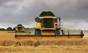 Two combine harvesters