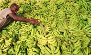 Bananaman: A vendor displays bananas at his stall in Somalia capital Mogadishu as Muslims prepare for the fasting month of Ramadan.