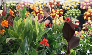 Exhibitors prepare their displays in the Floral Marquee at the Hampton Court Palace Flower Show  in London, England.