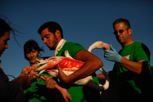 Flamingos: A volunteer holds a flamingo as it is fitted with an identity ring