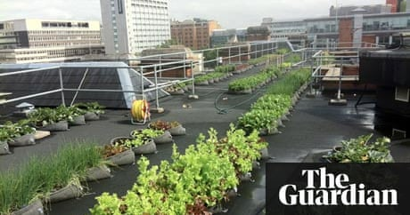 Offices Are Turning Their Roofs Into Edible Gardens And