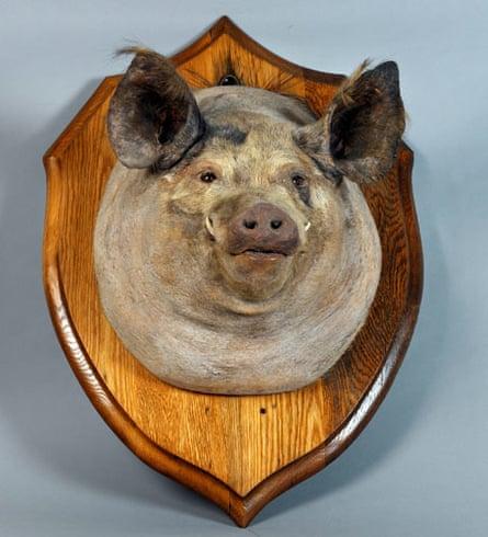 Bust of the pig Tirpitz