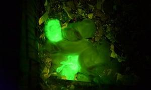 glowing green rabbits