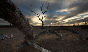 Dead fire-damaged trees near Emu Bay, Kangaroo Island, Australia