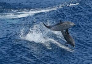 Week in wildlife: Dolphins leaping