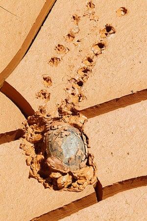 Week in wildlife: A tortoise makes its way through mud in Kfar Kila village in south Lebanon