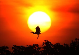 Week in wildlife: An egret is seen against the setting sun at the lakeside of Poyang Lake