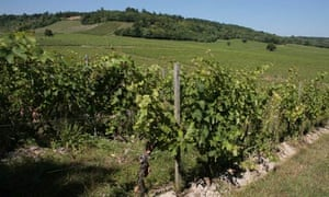 Denbies vineyard