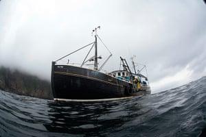 Orkney Islands Jellyfish : MV Halton