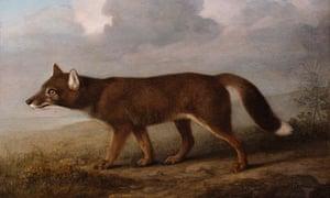 Portrait of a Large Dog, George Stubbs's depiction of a dingo