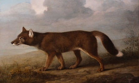 Portrait of a Large Dog, George Stubbs's depiction of a dingo