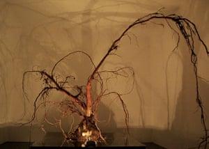 exhibitionist2408: Rachael Gomery