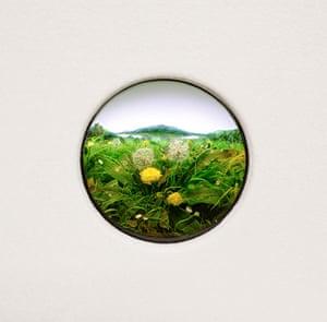 No Small Dreams: Patrick Jacobs, Dandelion Cluster #7, 2012