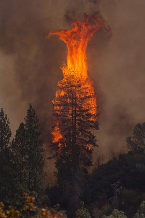 wildfire: Rim Fire