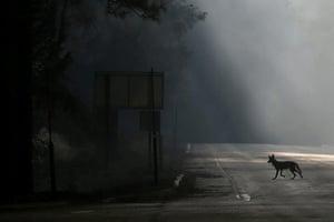 wildfire: Rim Fire Burns Near Yosemite National Park