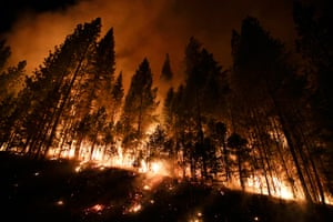 Wildfire update: Trees burn in a burnout fire as firefighters continue to battle the Rim Fir
