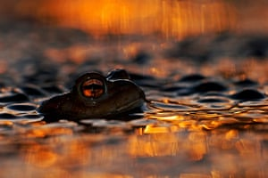 2013 WPY: toad's eye