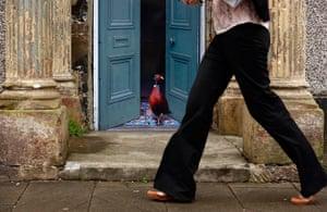 Artworks cover buildings: A pheasant in a grand doorway