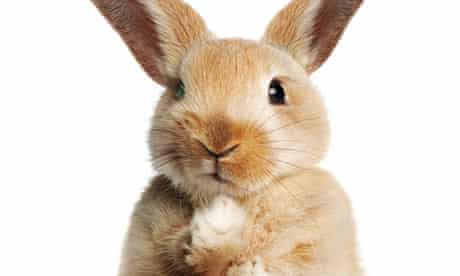 This rabbit is extremely disappointed in you – and possibly in a listicle somewhere.