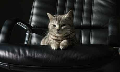 fat cat charity chief executive pay