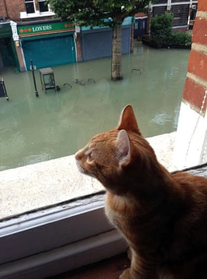 Herne Hill flood: Heston the cat has a look at the damage