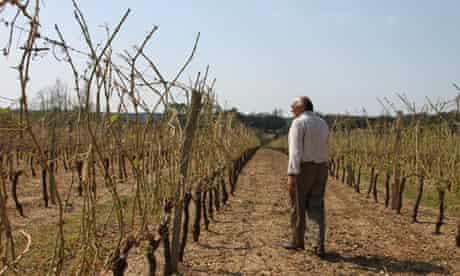 The Vicomte de Roquefeuil's vineyard