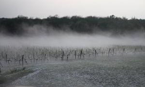 The Chateau de Castelneau vineyard during the hailstorm