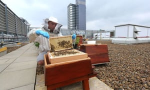 Bez and his urban bees