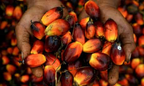 MDG :  Palm oil in Indonesia