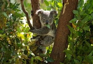 Week in wildlife: Currumbin Wildlife Sanctuary