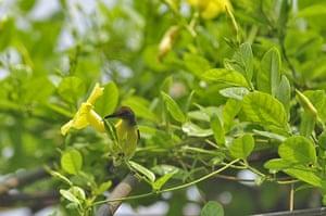 Week in wildlife: Birds of Bangladesh