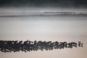 Week in wildlife: RSPB's Snettisham Nature reserve