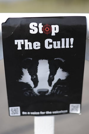 Week in wildlife: Badger cull protest
