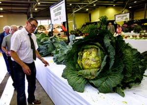 Nat Veg Champs: Judging the giant cabbages