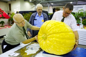Nat Veg Champs: Weighing the giant pumpkins