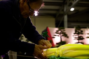 Nat Veg Champs: A competitor stages his entry in the celery classes