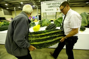 Nat Veg Champs: Weighing the giant marrows