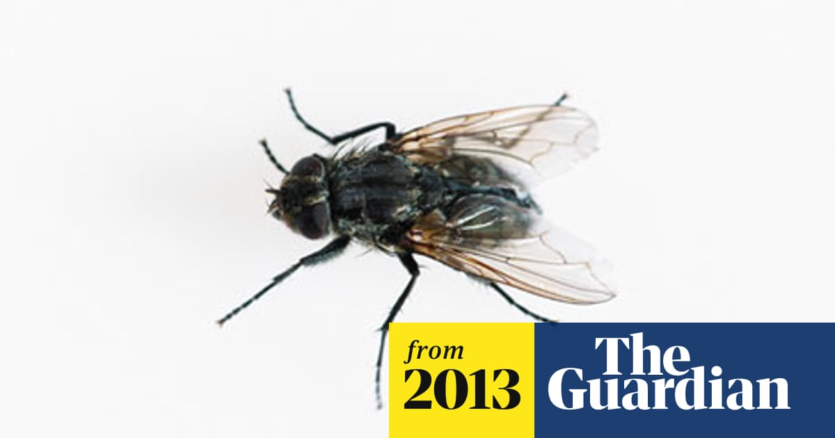 Time Passes More Slowly For Flies Study Finds Neuroscience The Guardian