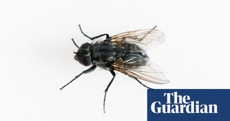 time passes more slowly for flies study finds science the guardian