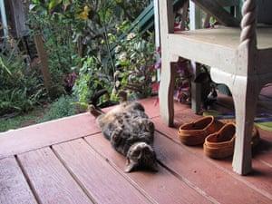 Cat yoga: kitty corpse yoga pose