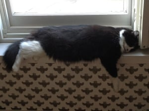 Cat yoga: conked out yoga cat