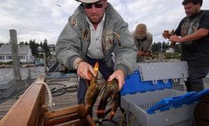 Buying lobster at a fisherman cooperative Stonington