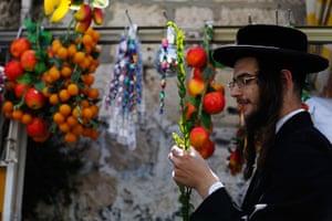 Sukkot preparations: A man examines a myrtle branch for blemishes at a market in Jerusalem