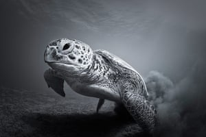 ZSL: Animal Photography Prize 2013