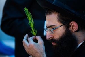 Sukkot: A Jewish man checks a myrtle branch for blemishes at a market in Jerusalem