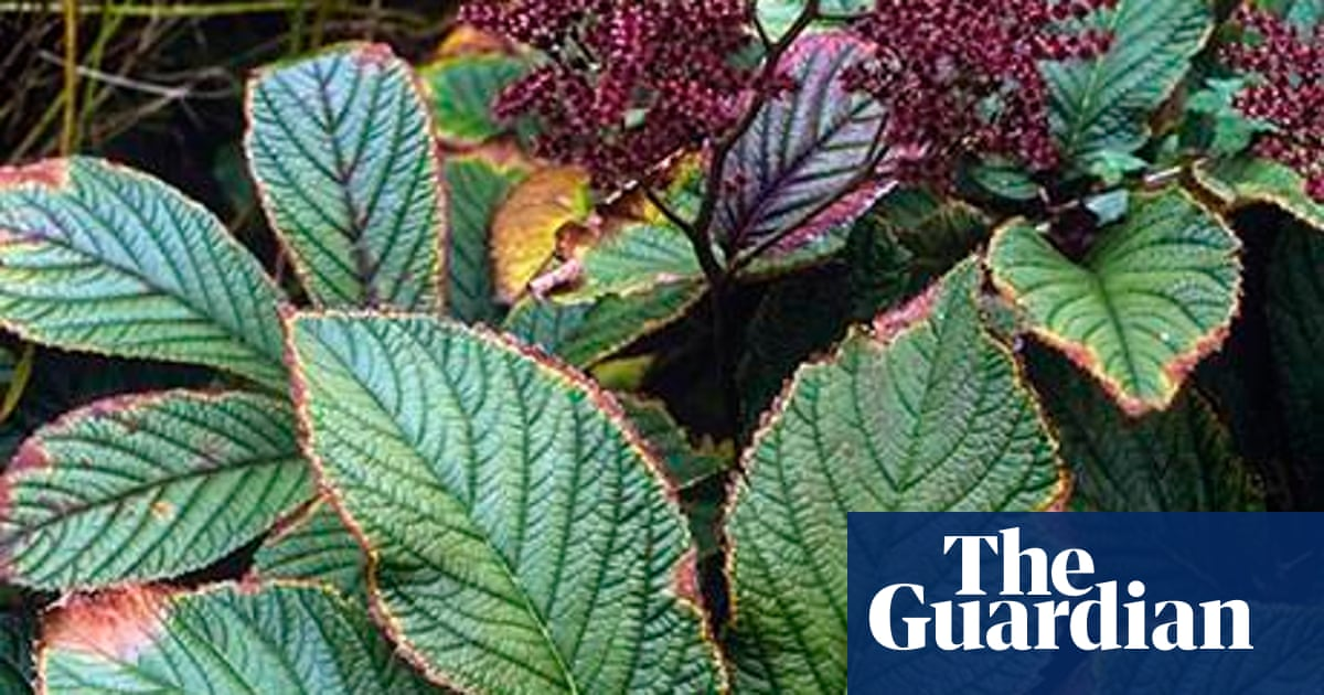 Gardens Damp Proof Plants Life And Style The Guardian