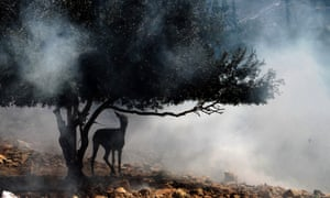 A donkey is tied to a tree amid tear gas fired by Israeli troops after clashes broke out with Palestinians during the weekly protest against the Jewish settlement of Qadomem, near Nablus, West Bank. According to reports, five Palestinians were wounded during the clashes.