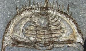 Specimen of the trilobite Mummaspis muralensis
