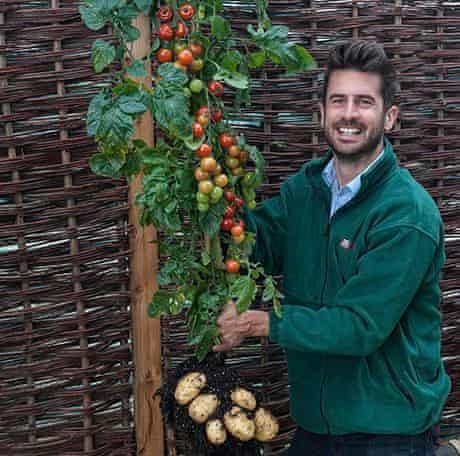The TomTato: a tomato-potato hybrid.